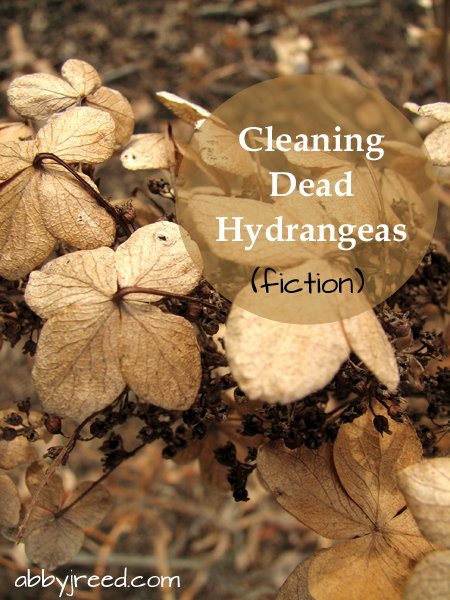 Cleaning Dead Hydrangeas